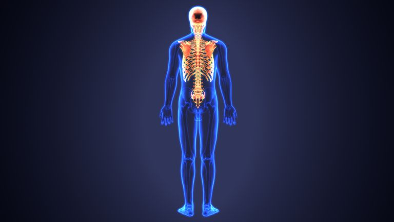 Illustration of a human figure with axial skeleton (ribs, spine, skull, scapula) highlighted