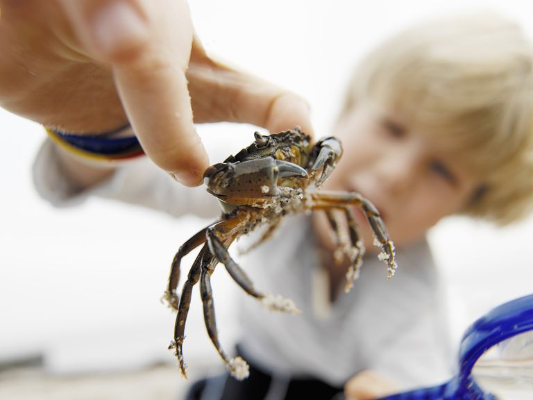 shellfish-allergy-by-David-Trood:Getty-Images.jpg