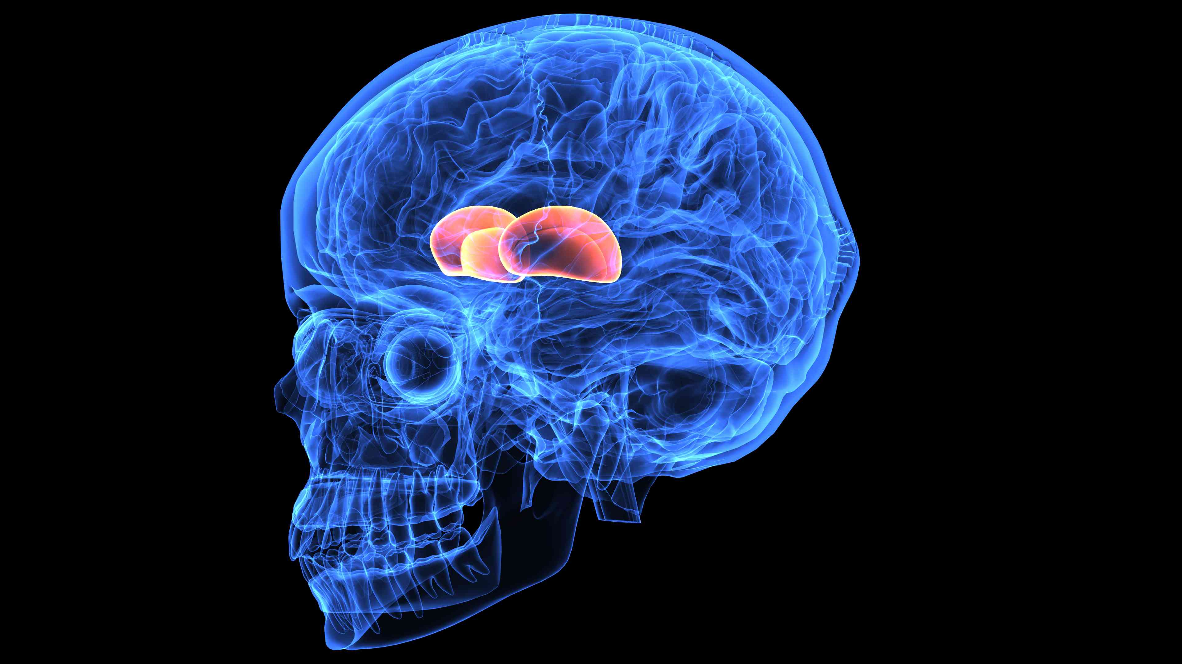 The Diencephalon: Anatomy, Structure and Treatment