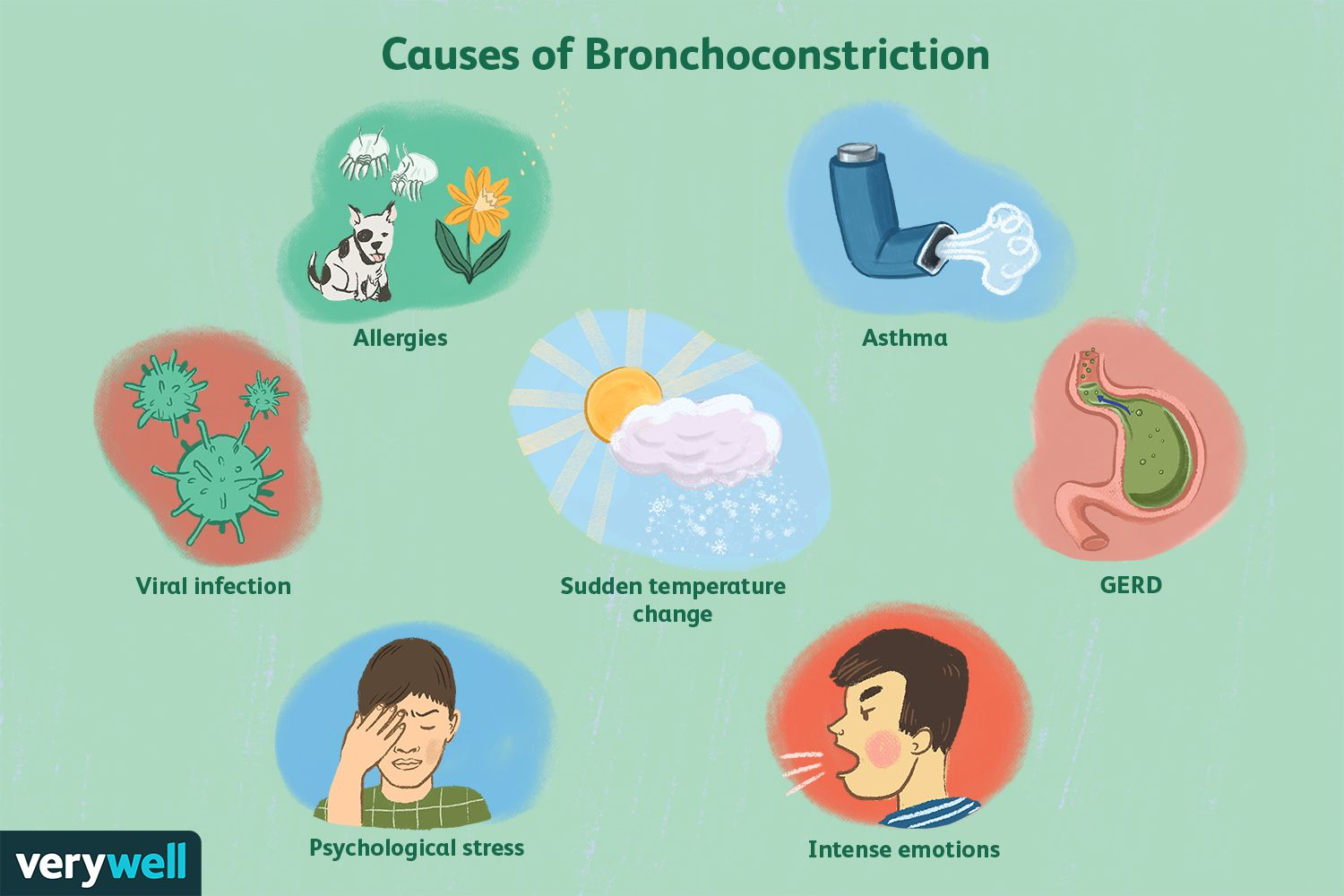 Causes of Bronchoconstriction