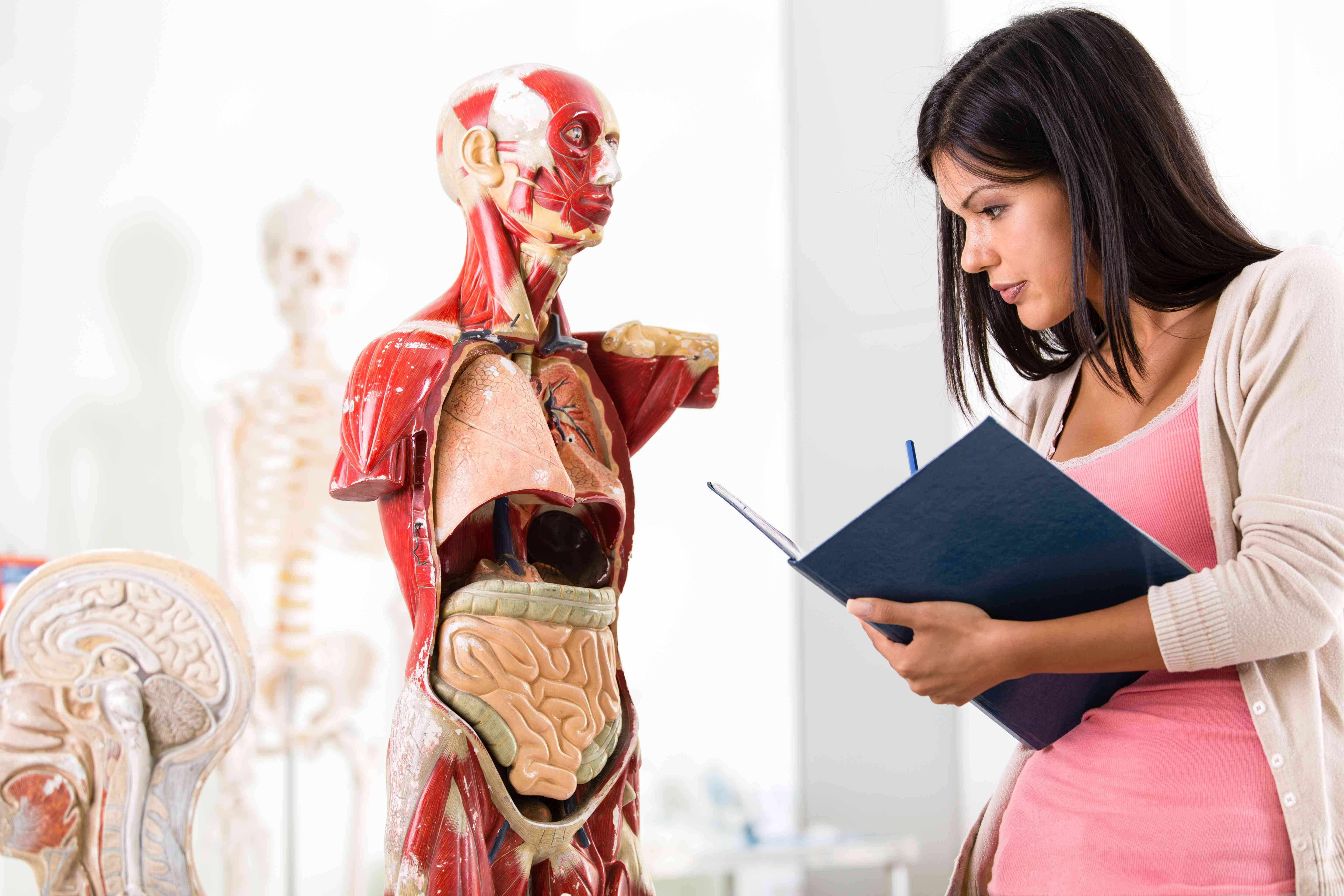 Woman looking at model of human body