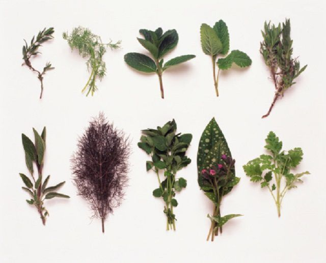 Herbal and Alternative Remedies for COPD