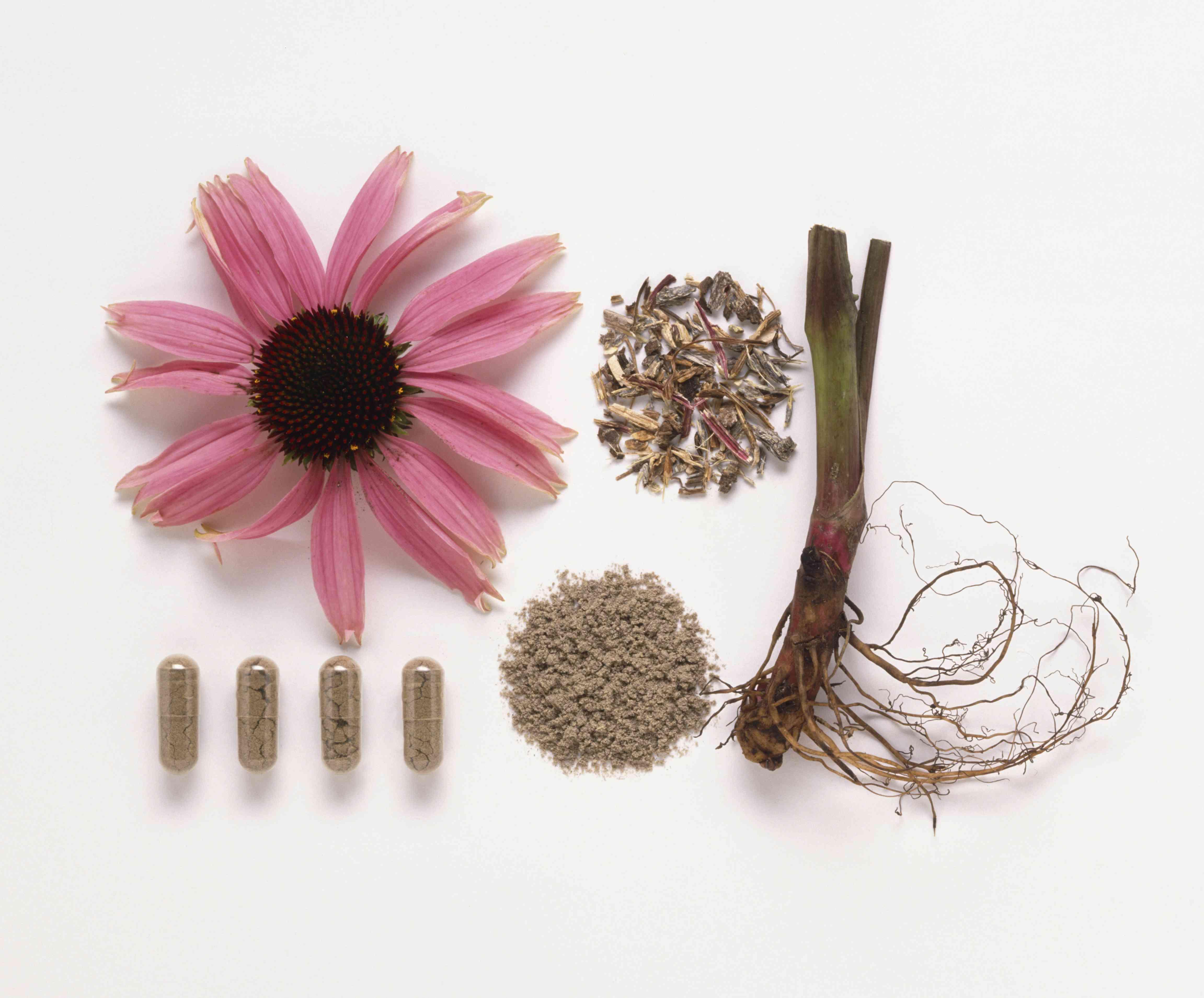Echinacea, purple coneflower, fresh and dried root, and capsules