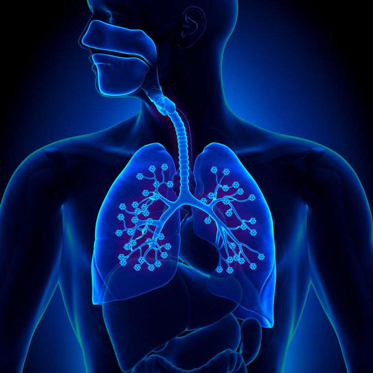Alveoli Structure Function And Disorders