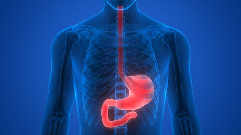 Illustration of the esophagus and stomach