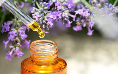 Lavender flowers and Beauty Facial Serum or Smooth and Glow Facial Natural Essential Oil. Close up. Natural concept for skin care routine. Copy space. Close up. Front view.