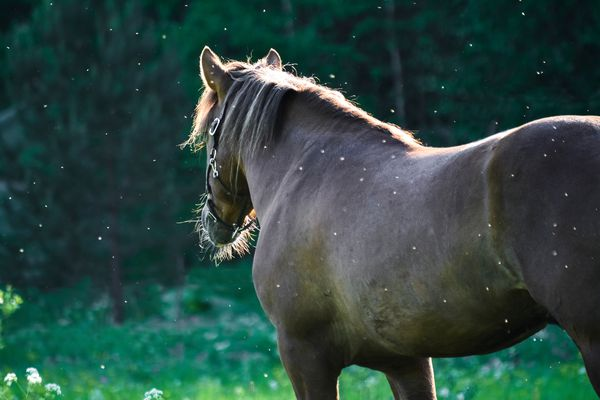 eastern equine encephalitis affects both horses and humans