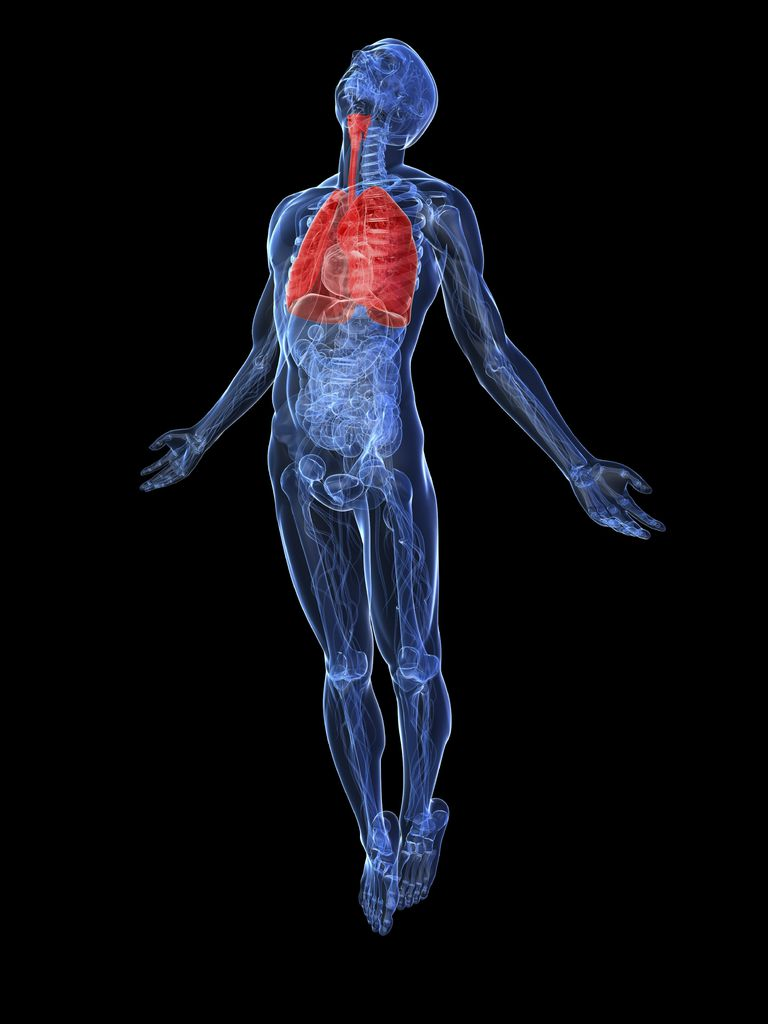 diagram of the human body with the respiratory system in red