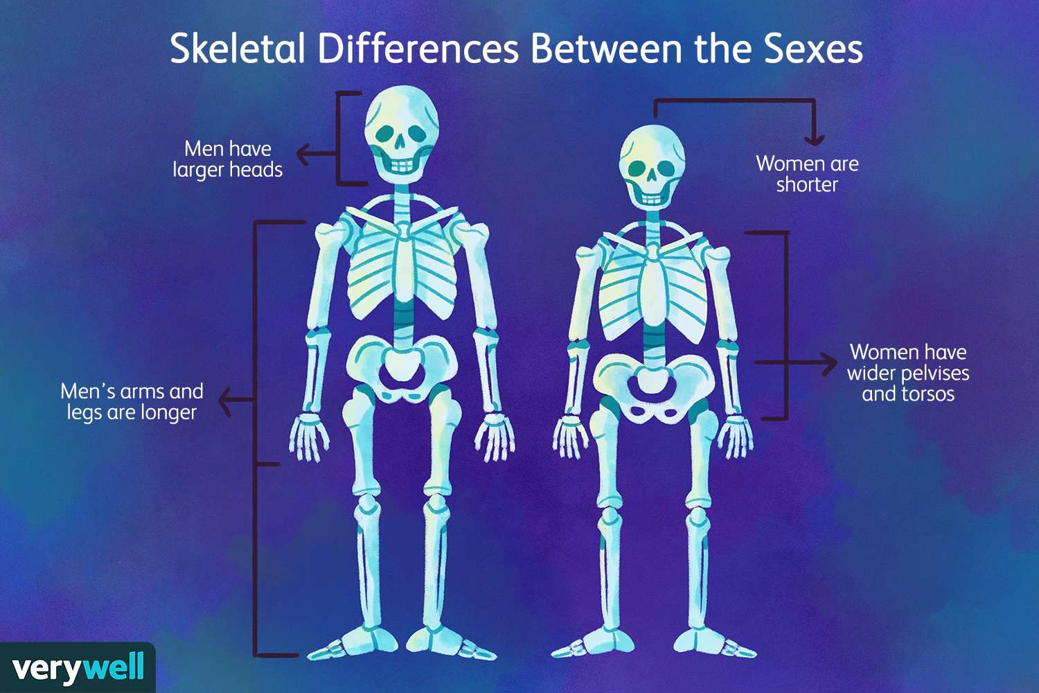 31+ Why is osteoporosis more common in females than males info