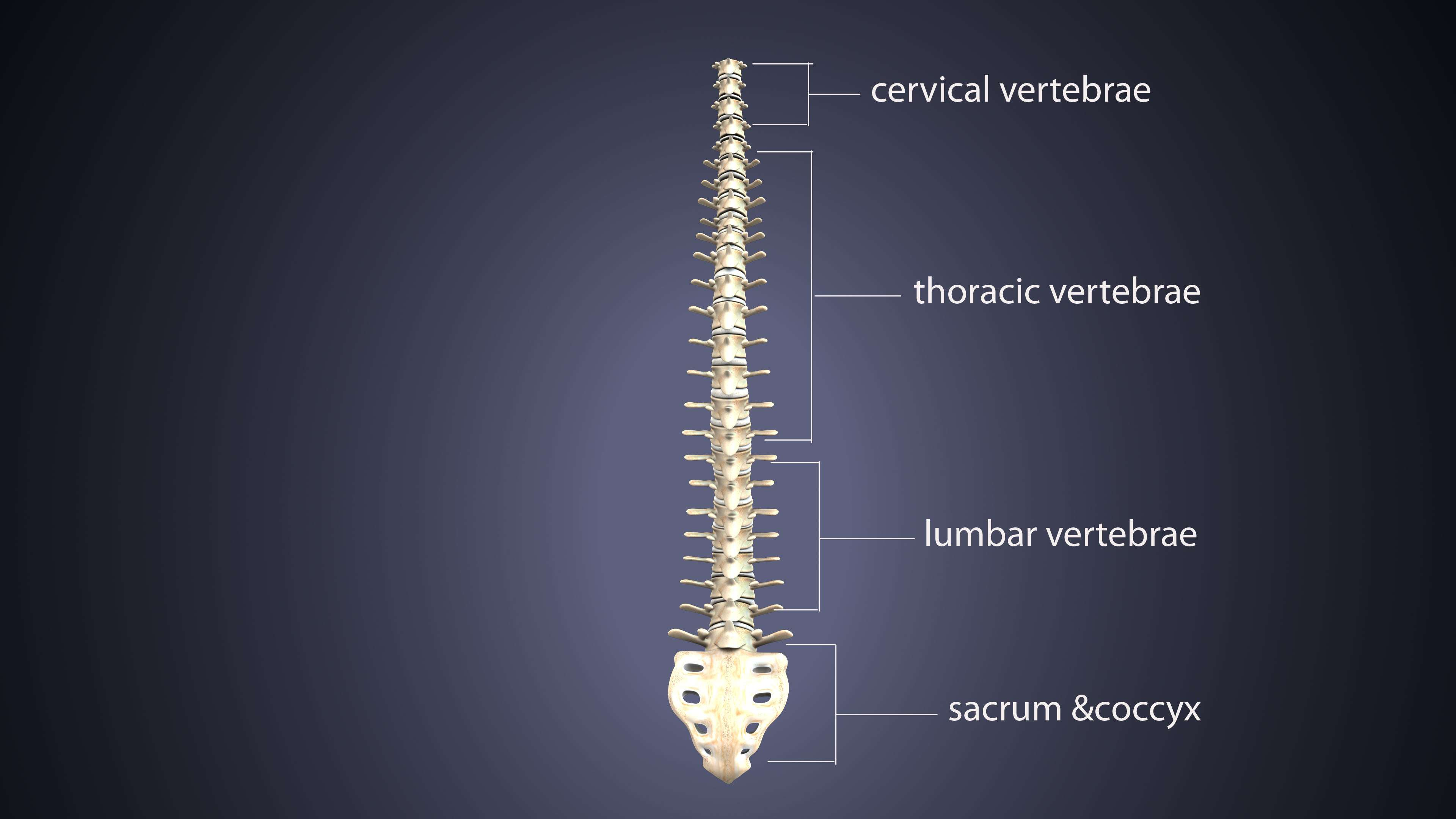 A diagram shows the regions of the spine.