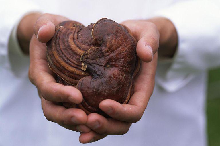 Ganoderma Coffee - Benefits of This Reishi Drink