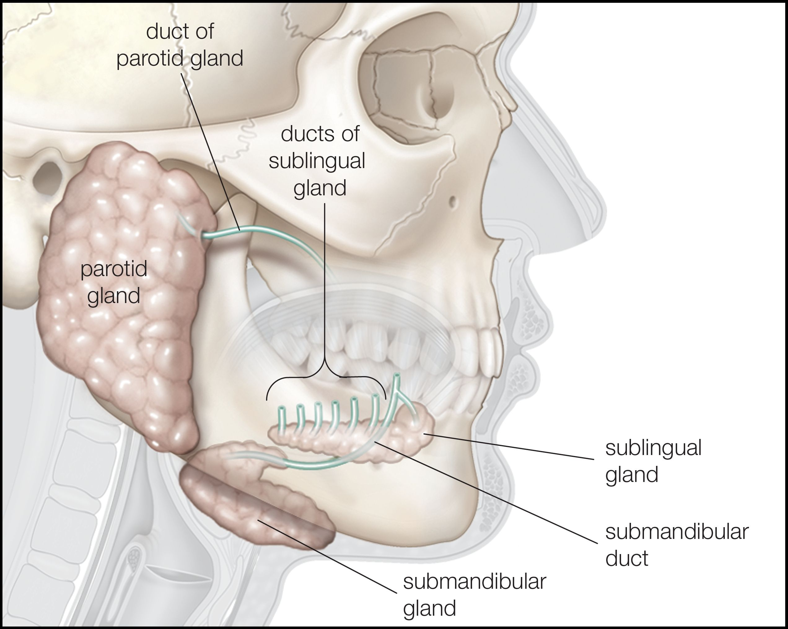 Symptoms Of Salivary Gland Cancer