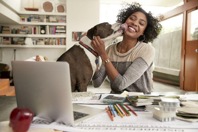 Dog licking face of female interior designer working at home office desk
