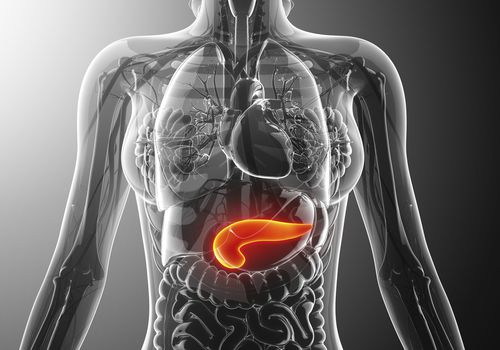 The location of the pancreas.