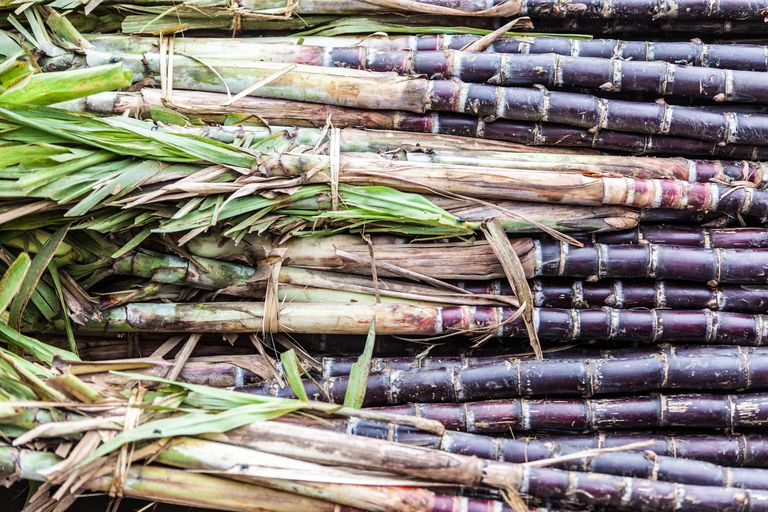 Close-up of sugar cane stalks