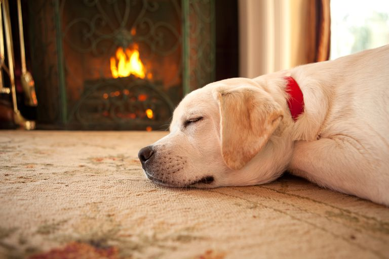Dog sleeping in front of fireplace