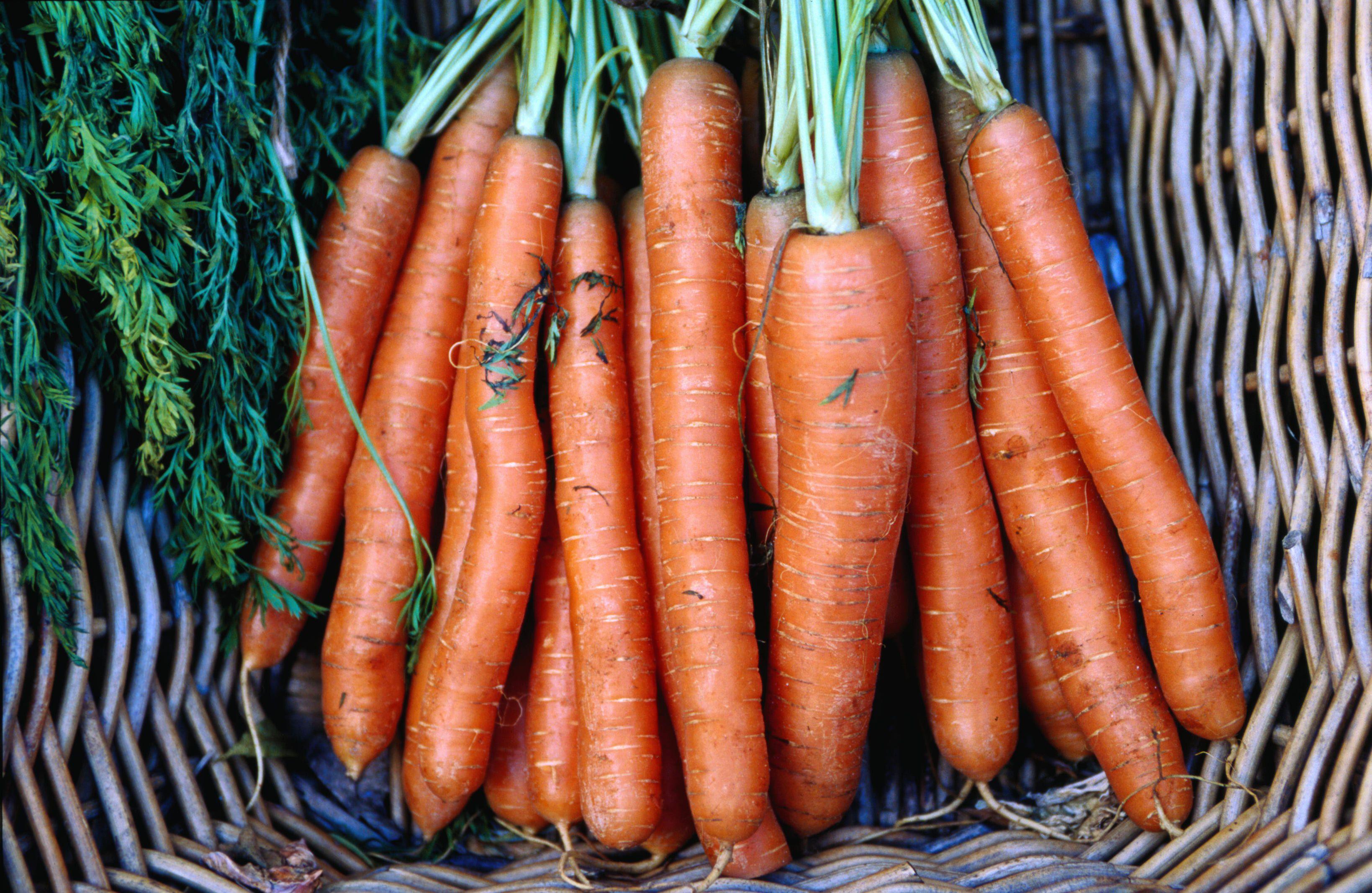 Orange Carrots in a Basket