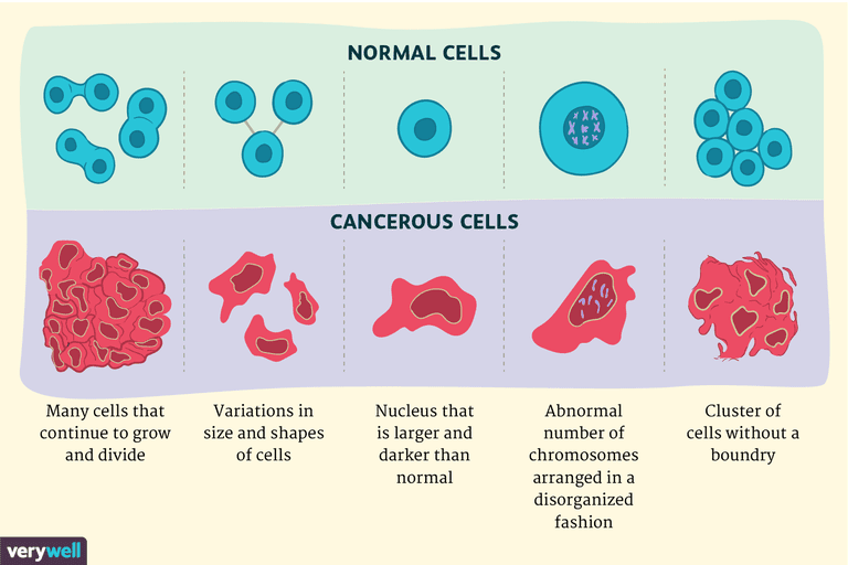 Difference Between Cancerous and Normal Cells