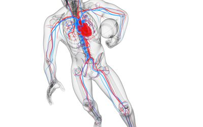 athlete and blood vessels