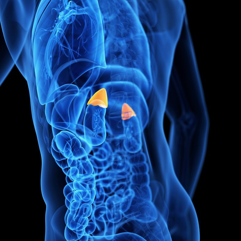 adrenal glands, a common site of lung cancer metastases