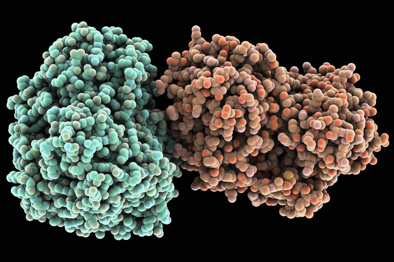 The hepatitis C virus