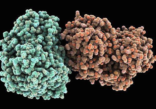 The hepatitis C virus.