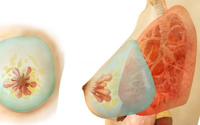 Medical illustration of female breast, front and side view.