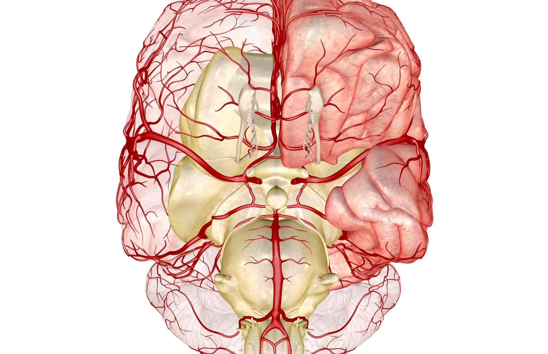 Posterior Communicating Artery Anatomy, Function
