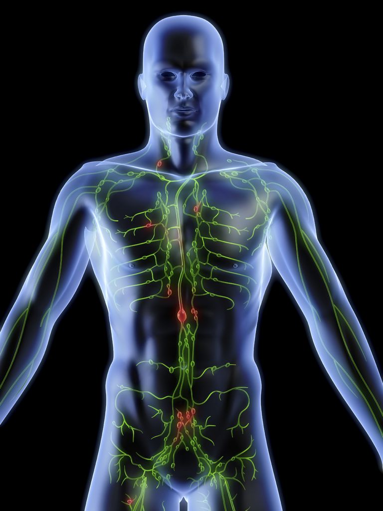 Lymph Nodes Structure Function Types And Causes
