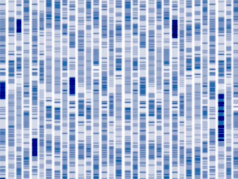 DNA autoradiogram looking for BRCA2 mutations and an association with lung cancer
