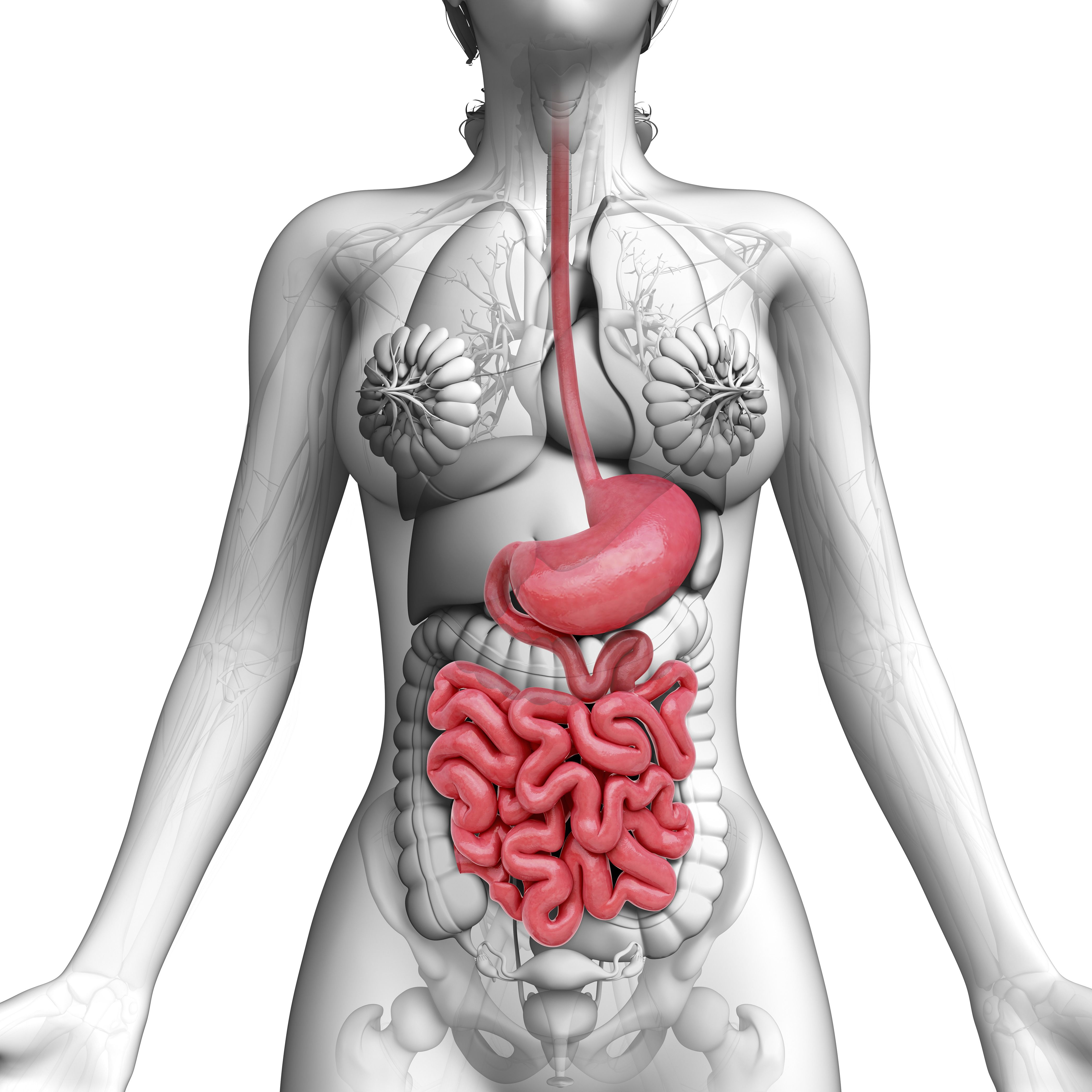Your Digestive System In Pictures