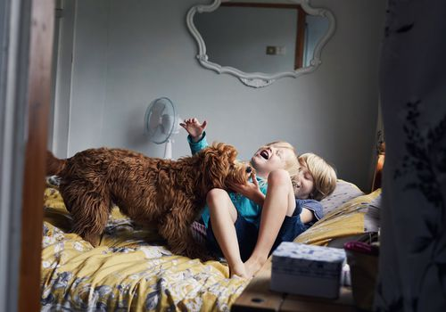 Two brothers playing with their dog on the bed