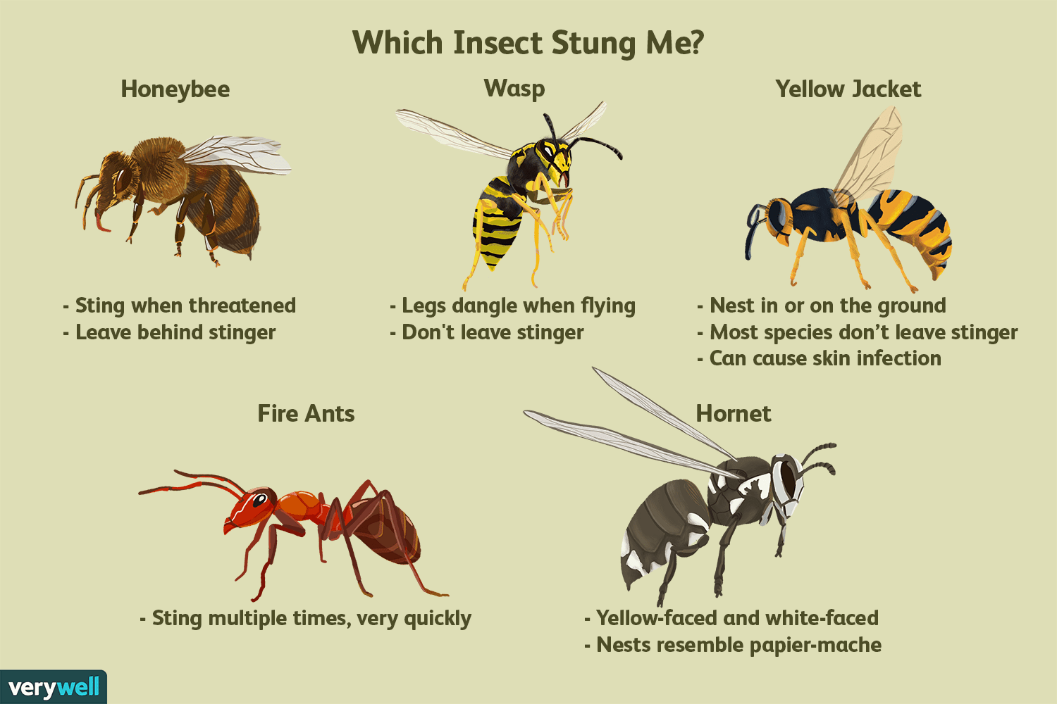 Which Insect Stung Me