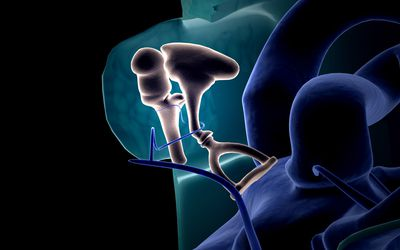 The middle ear - stock illustration