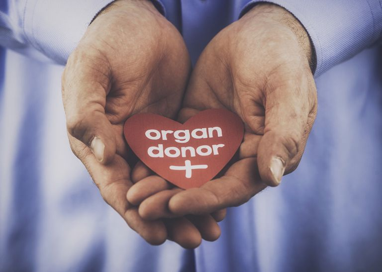 close up of hands holding a paper heart that says organ donar