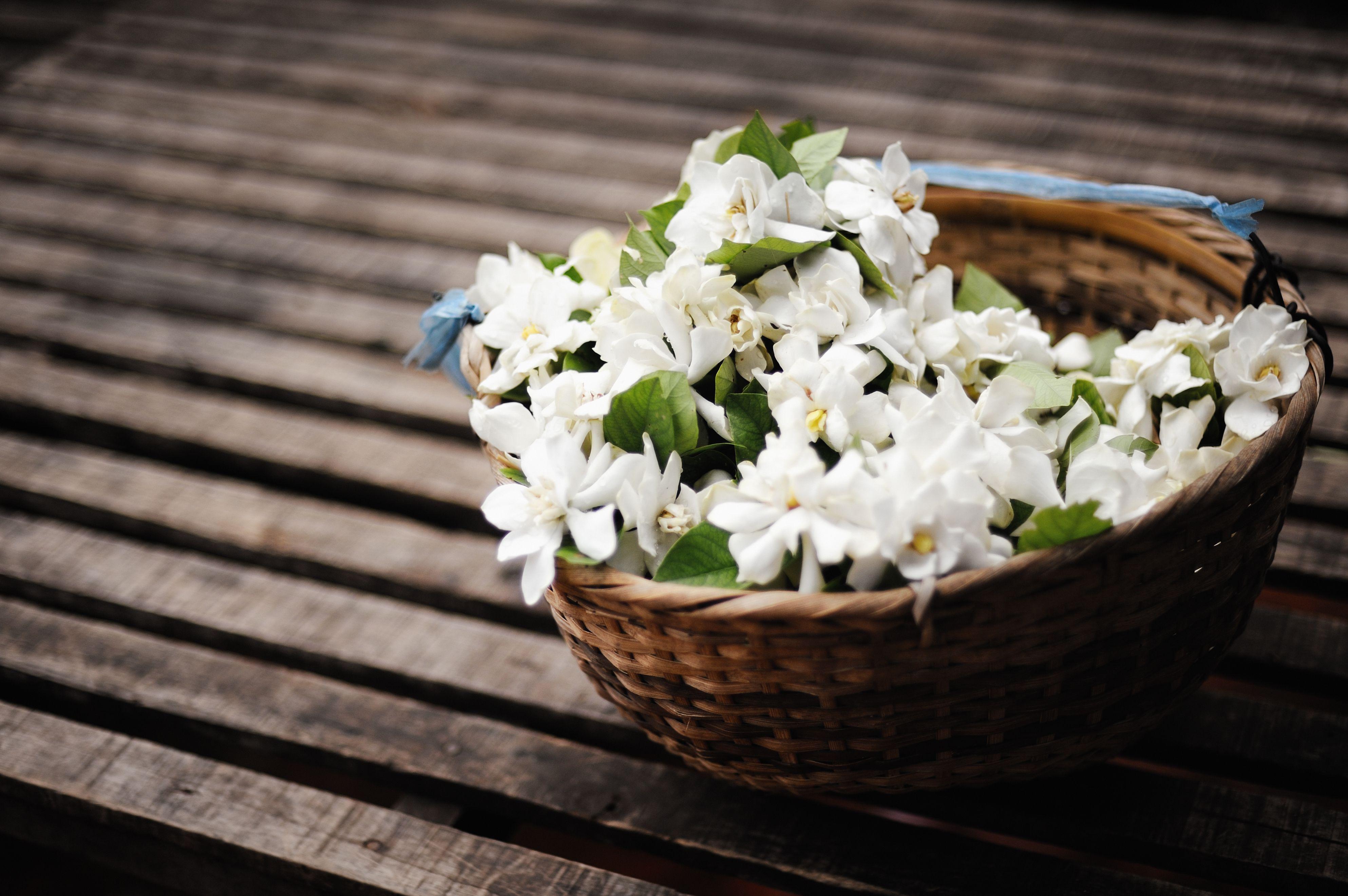 Health Benefits And Uses Of Jasmine Oil