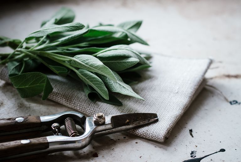 fresh sage leaves on a table