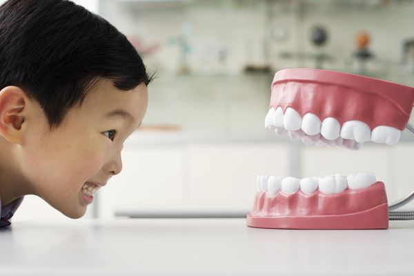 child looking at a large model of teeth
