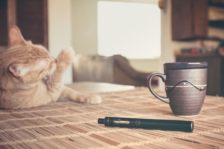 Vape pen, coffee, and the cat on the kitchen table.