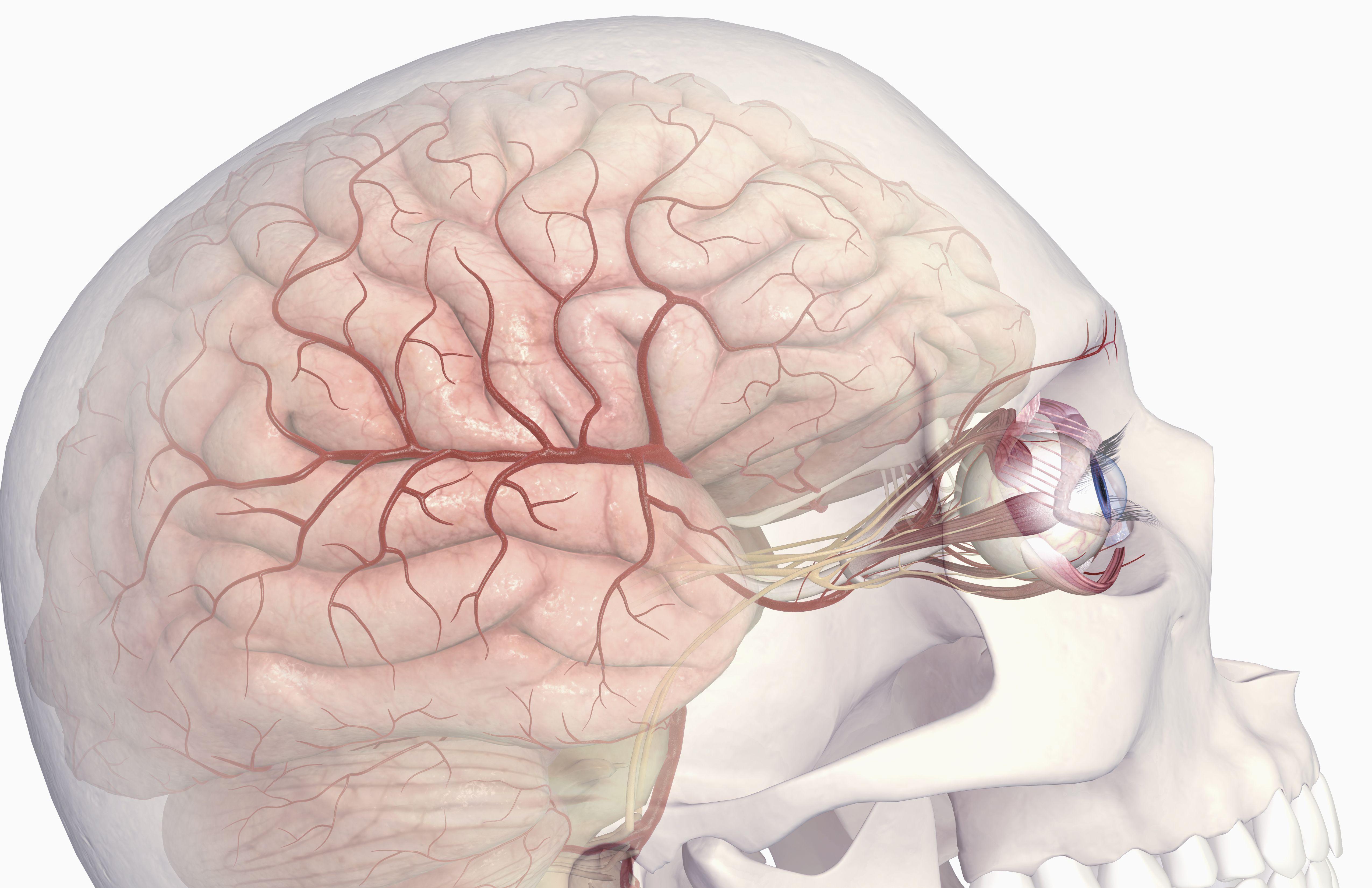 Cranial Nerve Damage From Head Trauma