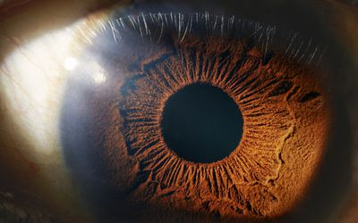 Close-up of an eye showing the details in the iris and sclera.