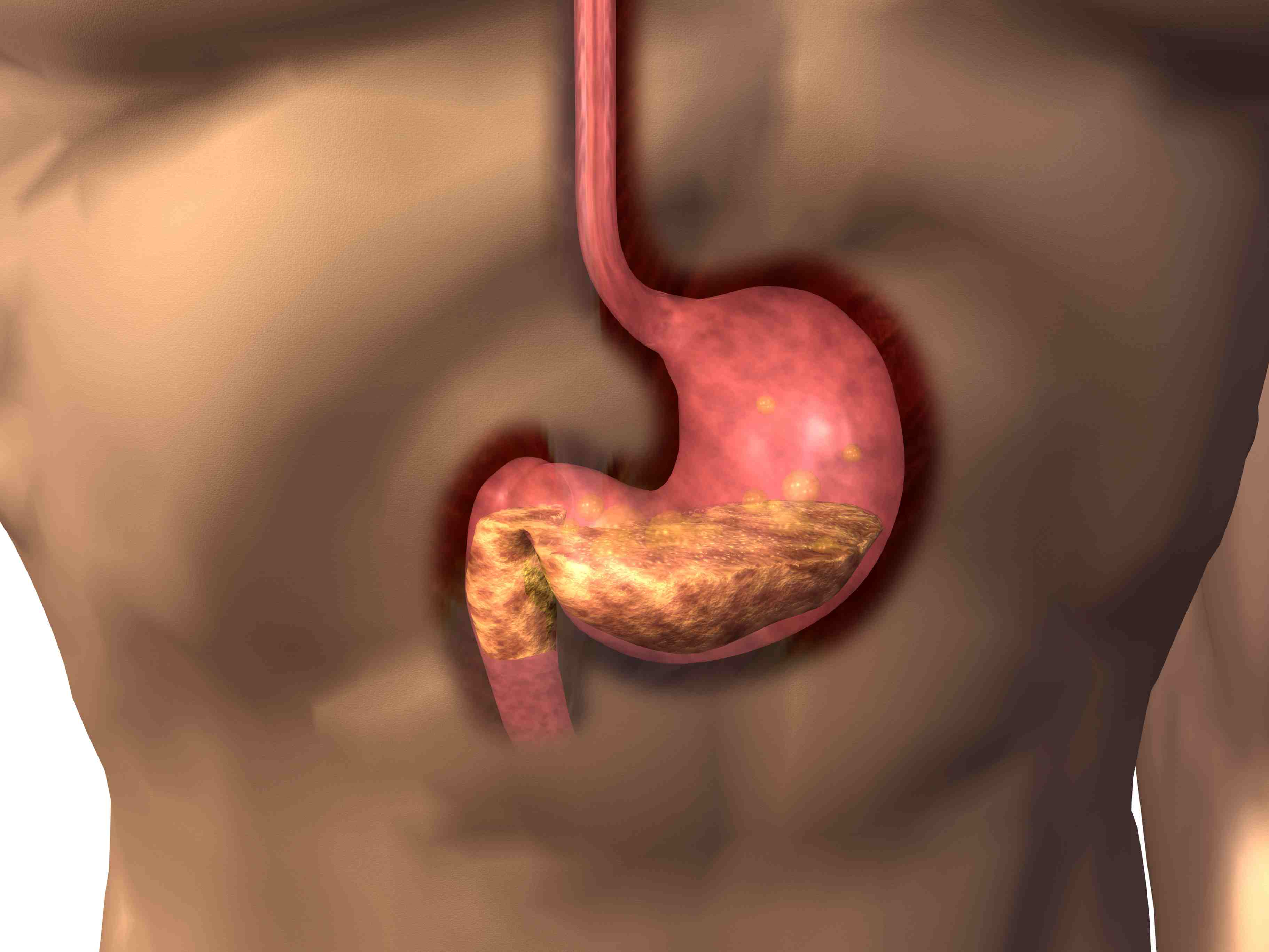 Interesting Digestive System Facts