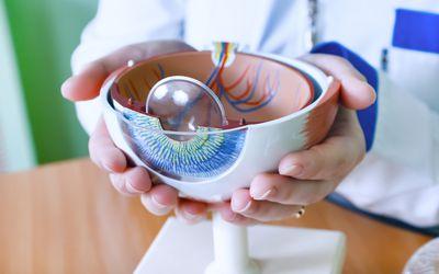 Model of the eye.