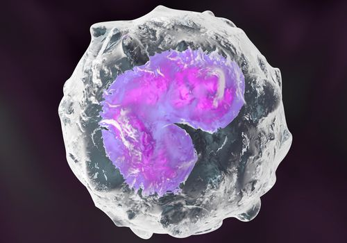 3D rendered Illustration of anatomically correct Monocyte immune system defense cells