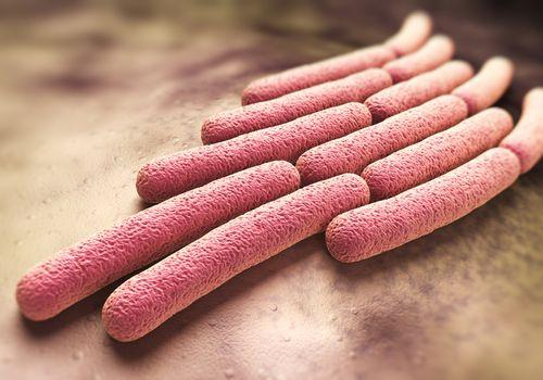 Shigella sonnei bacteria shown in a colony