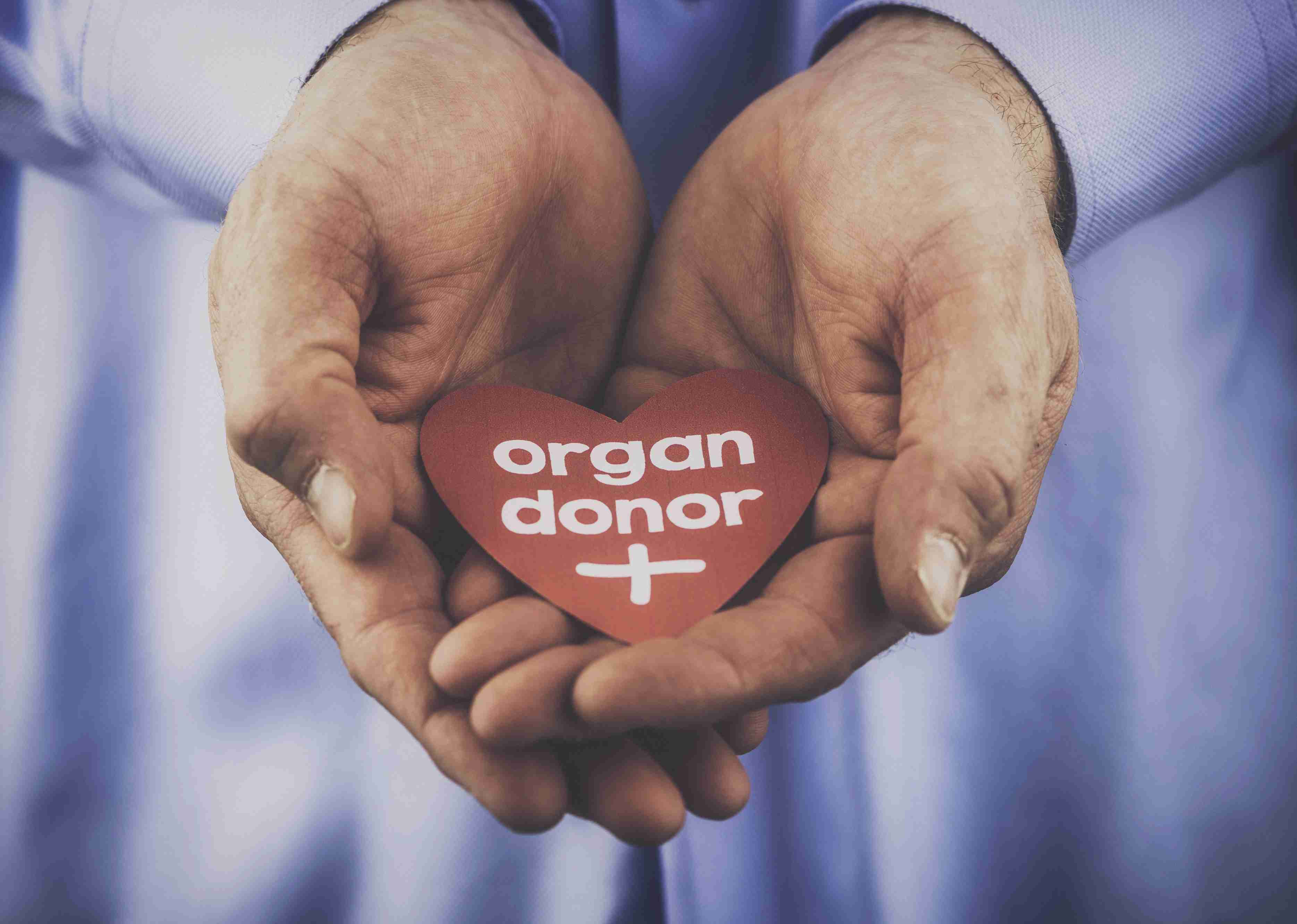 How To Donate An Organ To A Friend Or Family Member