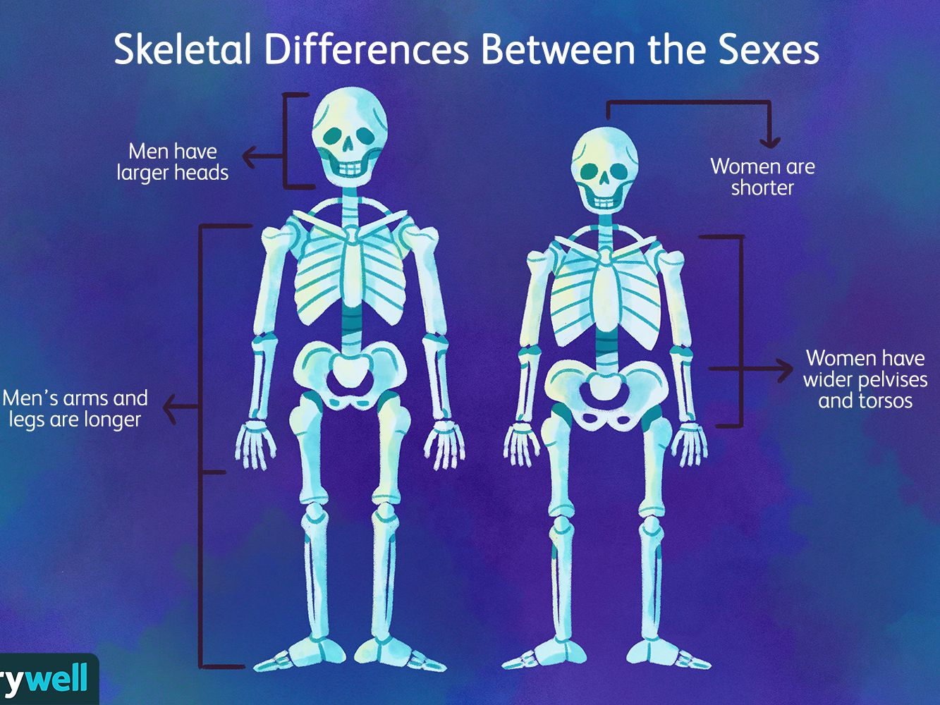 23+ What parts of the skeleton are most vulnerable to osteoporosis ideas in 2021