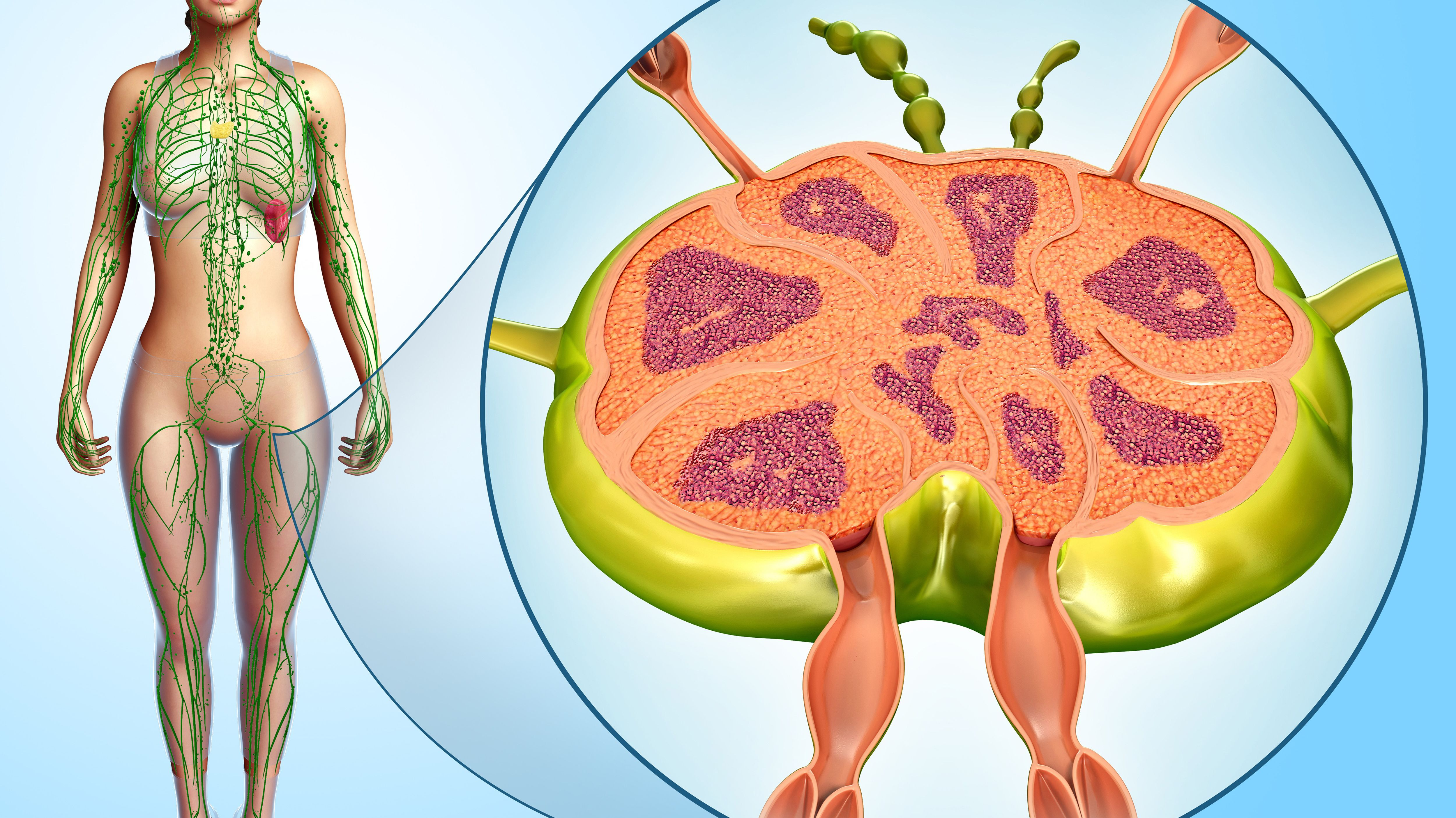 Do Enlarged Lymph Nodes Offer Clues About Cancer?