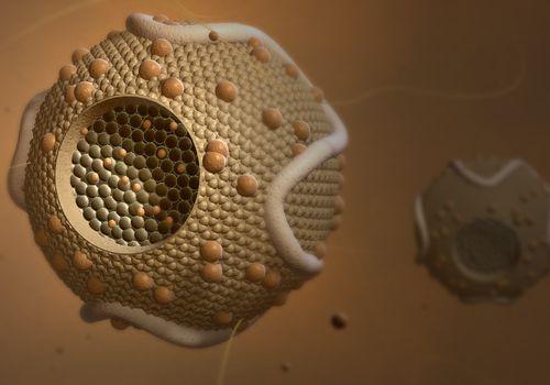 High density lipoproteins illustration