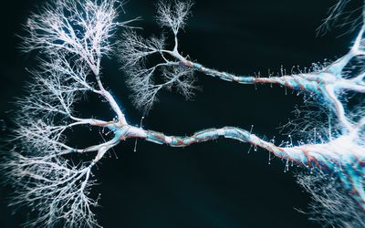 Neuron cell close-up view